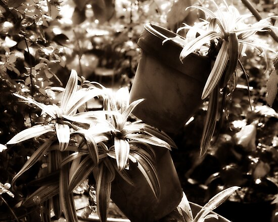 Diffused Flowers in pots by foto3dk