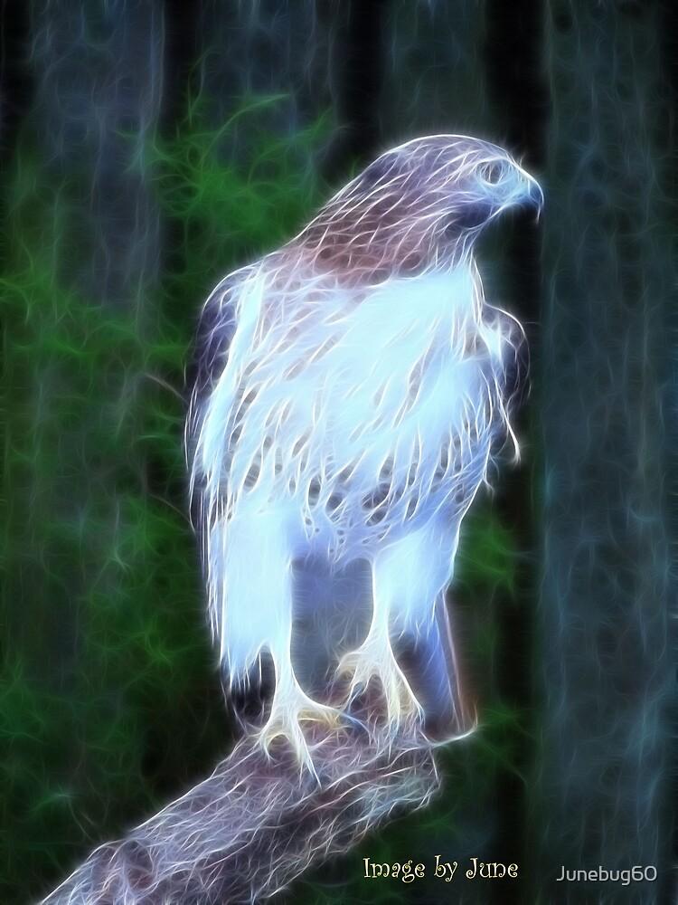 The Hawk by Junebug60