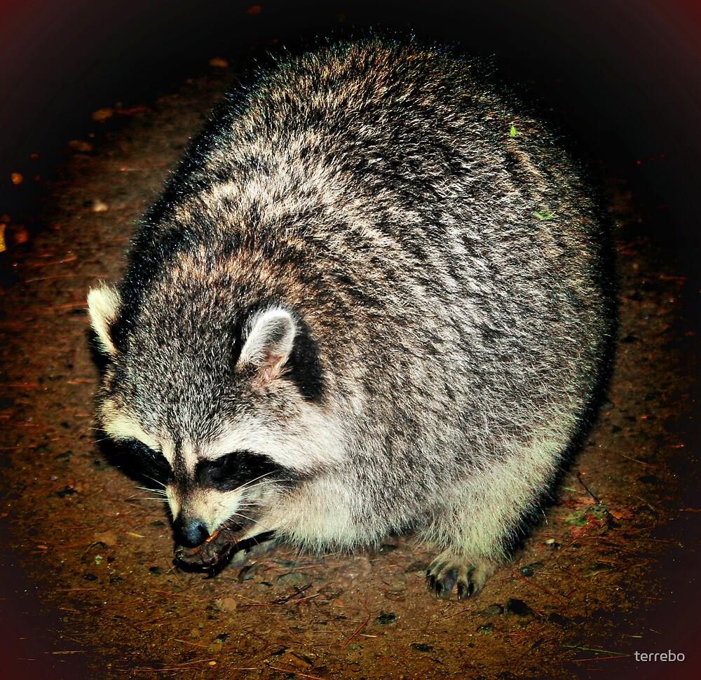 raccoon by terrebo