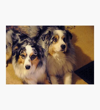 Mellie and Icey Photographic Print