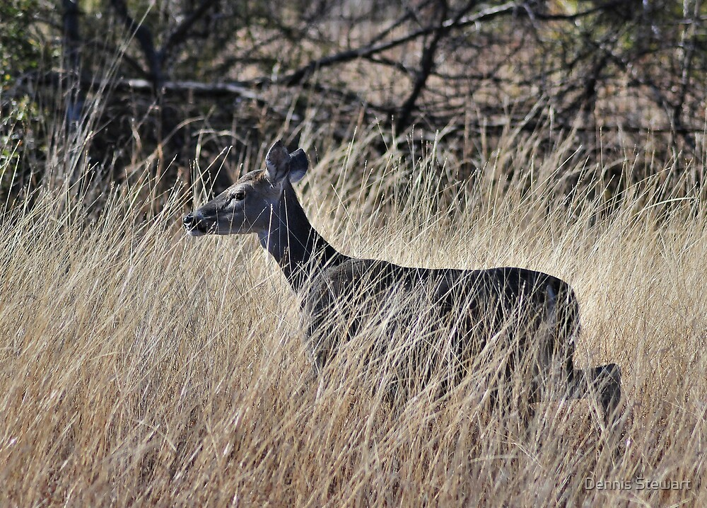 Deer in the Tall Grass by Dennis Stewart