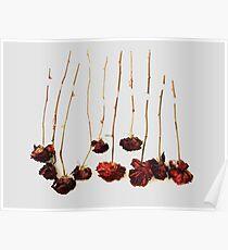 Ten Roses Poster