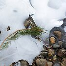 Tuolumne Ice by Chris Clarke