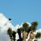 Cactus Wren, NV by Chris Clarke