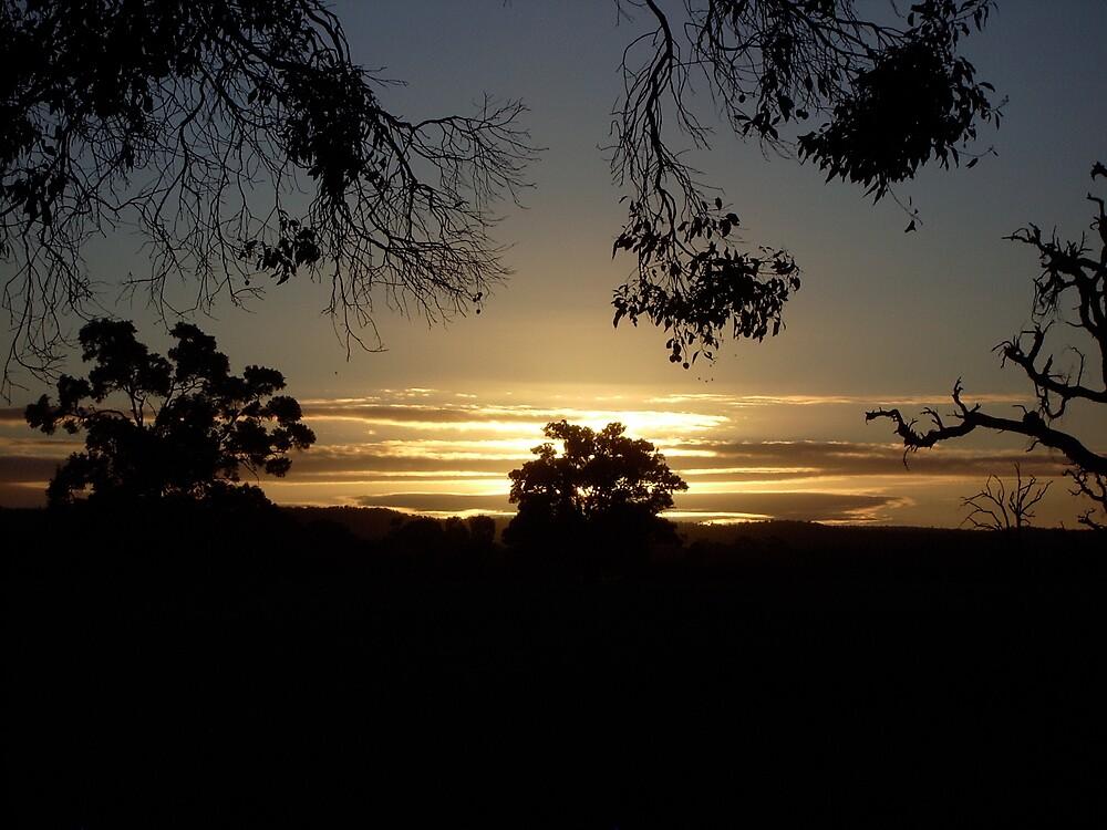 Dardanup Dawn untouched by Virgoan