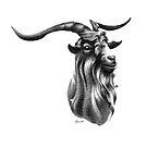 Billy Goat Head by Patricia Howitt
