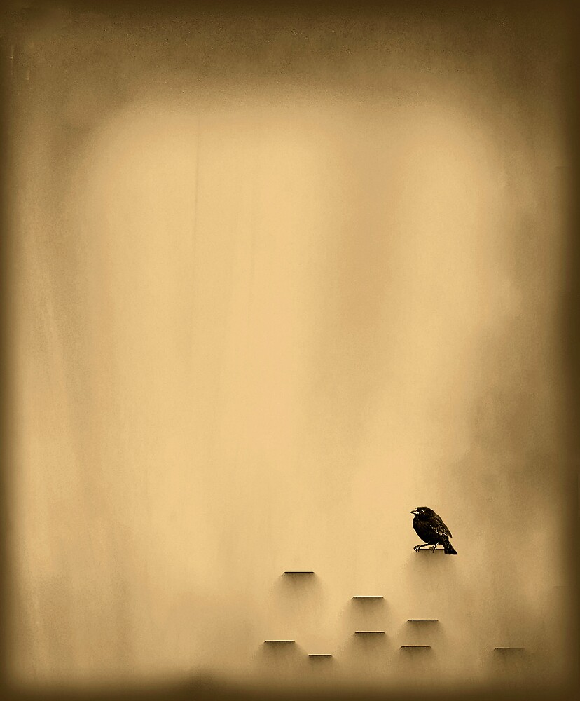 Small black bird by Thaa