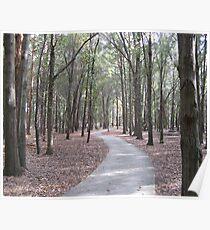 Walkway at Sholom Park in Ocala, Florida Poster