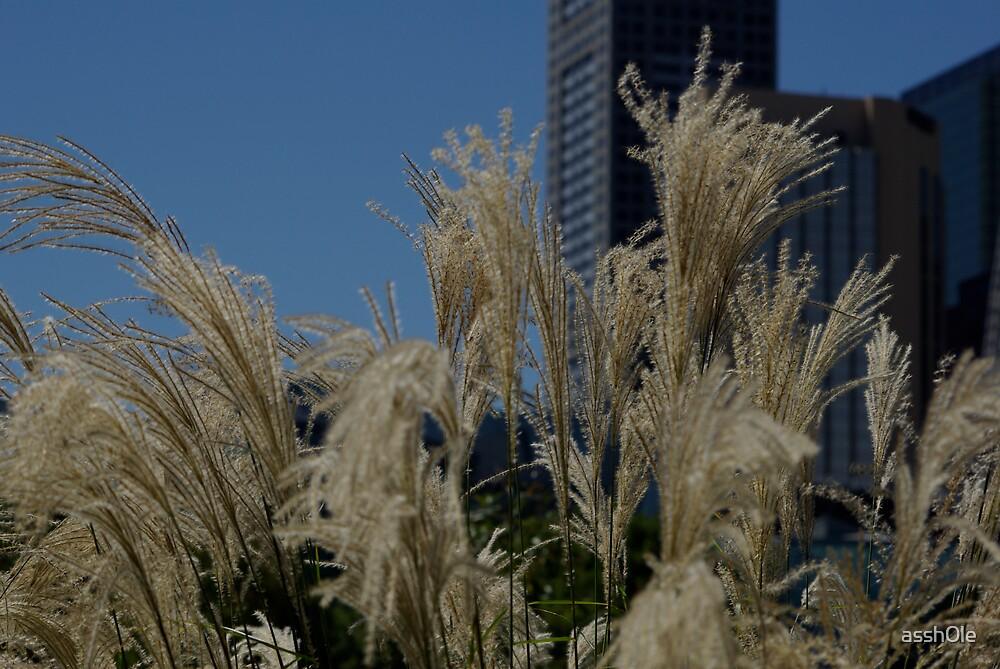 citygrass by assh0le