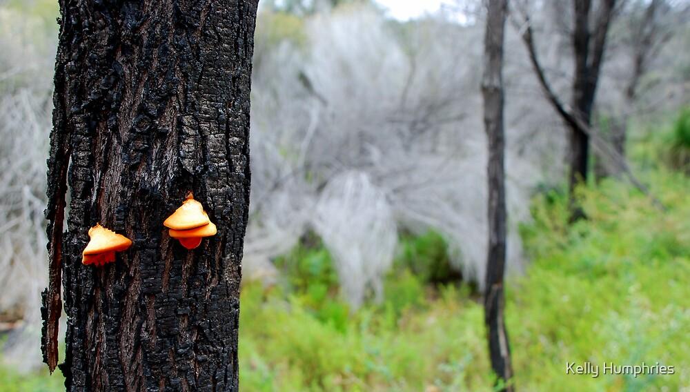 Beaks of Fungi by Kelly Humphries