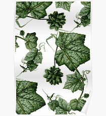Crawling plant Poster