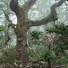 The ancient tree. by Francisco Larrea
