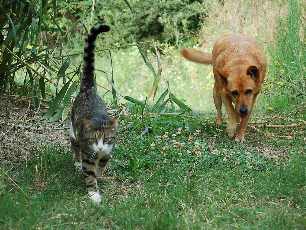 walk beside you by streetcats