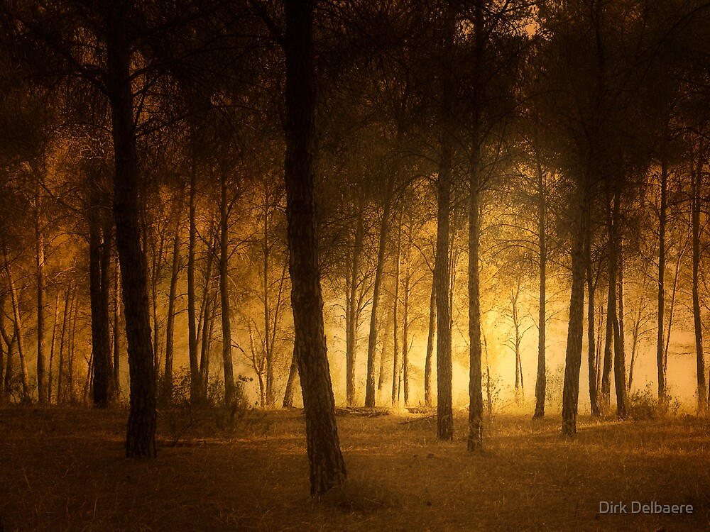 through the trees by Dirk Delbaere