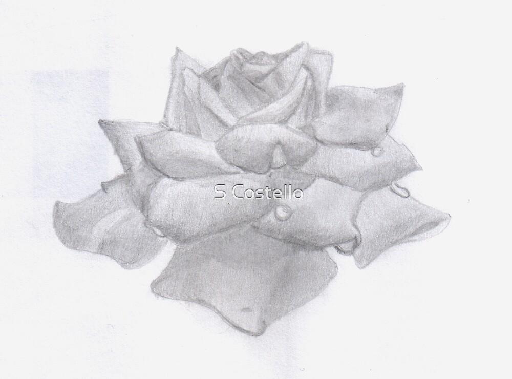 Sketchbook 2002 (Rose) by Sinead Costello