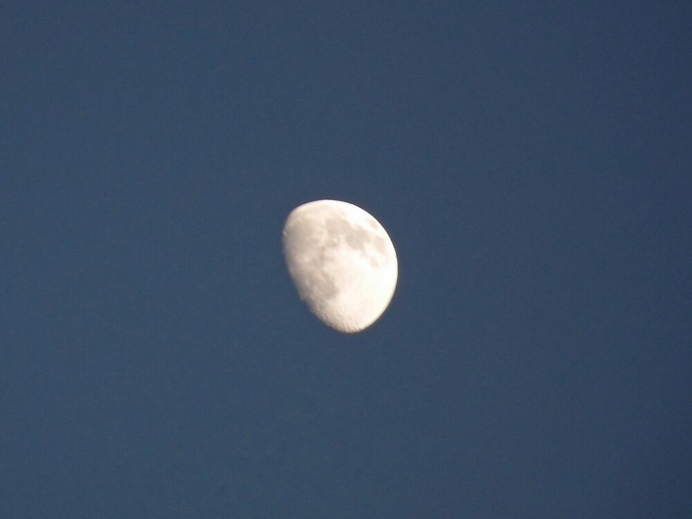 The half moon in a winter evening by presbi