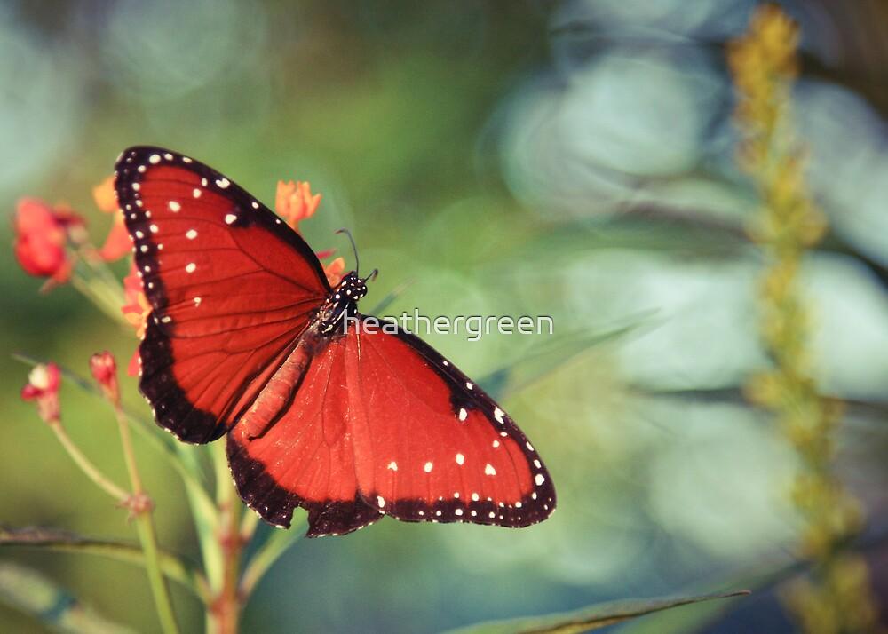 Butterfly by heathergreen