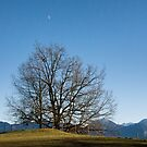 Winter Tree with a View by Kasia-D