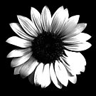 Sky Flower by Heather Friedman