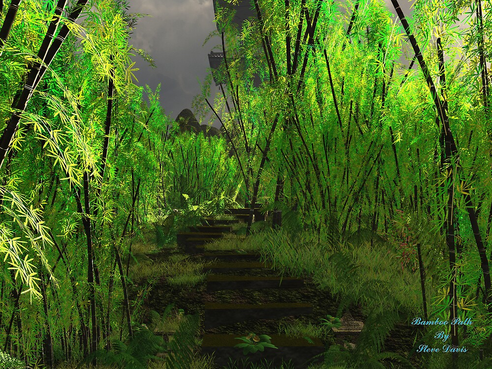 Bamboo Path by Steve Davis