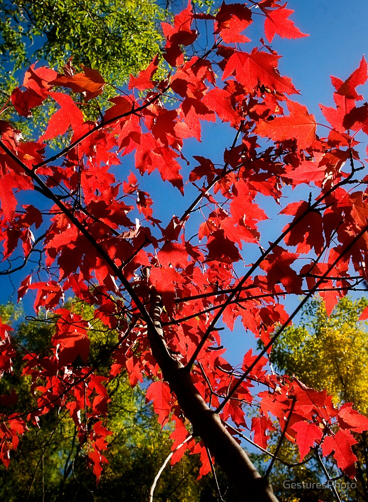 Red Leaves & Blue Sky by GesturesPhoto