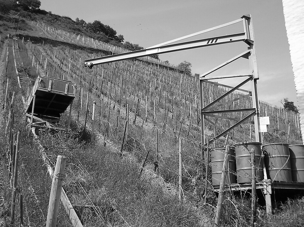 Barren Vineyard: Black & White by James Bull