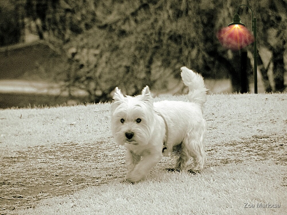 Square Doggie by Zoe Marlowe