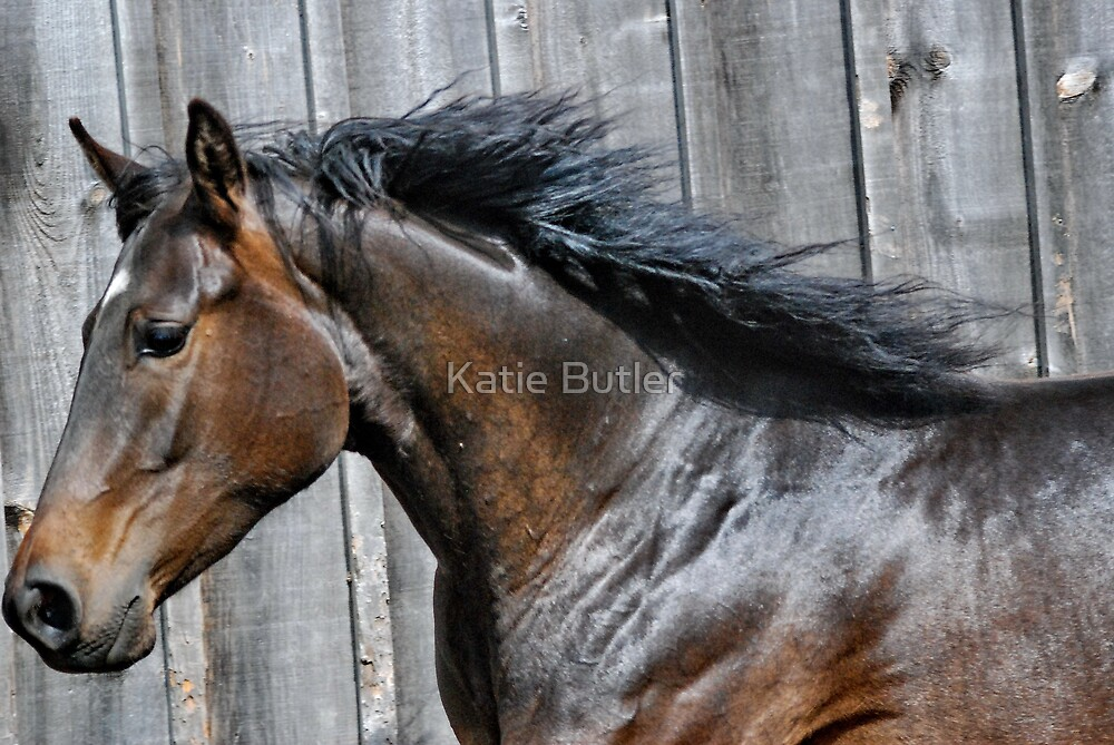 Sun Shines, Wind Blows, Manes Fly by Katie Butler