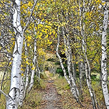 Birches, Great Meadow Loop and Jessup Trail by mdidrh