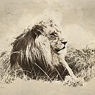 Vintage Lion by Mark Salmon