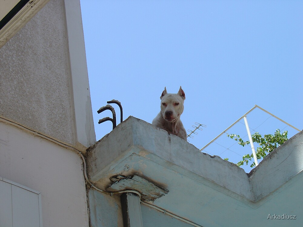 Watching You by Arkadiusz