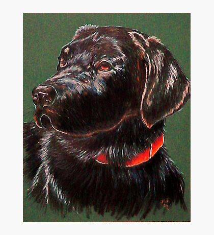 """""""King Charles""""~ Portrait Of A Black Lab Photographic Print"""