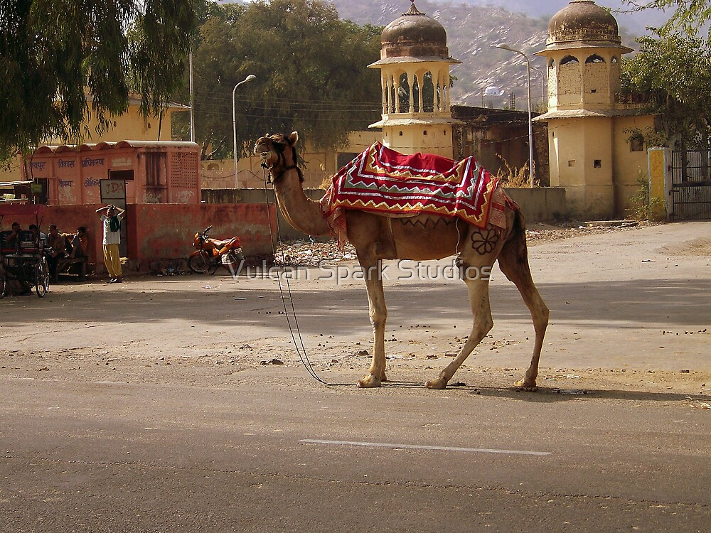The Locals:  Camel Carriers by Vulcan Spark Studios