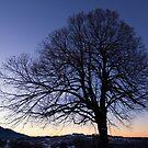 Winter Tree Dusk by Kasia-D