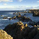 Along the Rocky Shoreline by Brian Carey