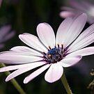 Little purple flower by Christian  Zammit