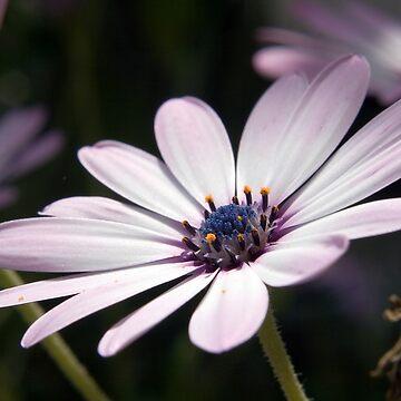 Little purple flower by sbosic
