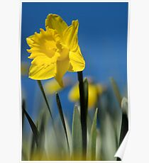 Lent lily Poster