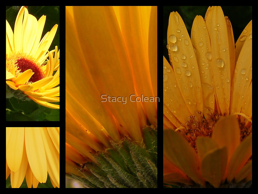YELLOW BEAUTYS by Stacy Colean