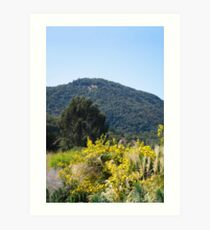 Sonoma California Vineyard Grounds Art Print