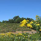 Sonoma California Vineyard With Daisies by Zehda