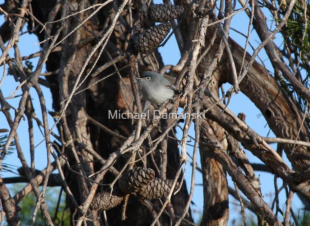 Grey Bird by Michael Damanski