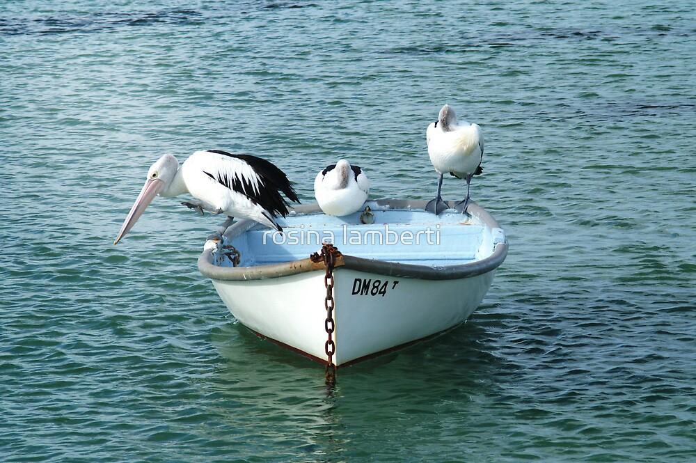 Three Pelicans by Rosina  Lamberti