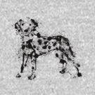 dalmatian by akwel