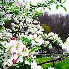 apple blossums by LoreLeft27