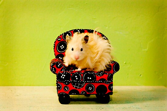 Comfy Hamster by Avonlea
