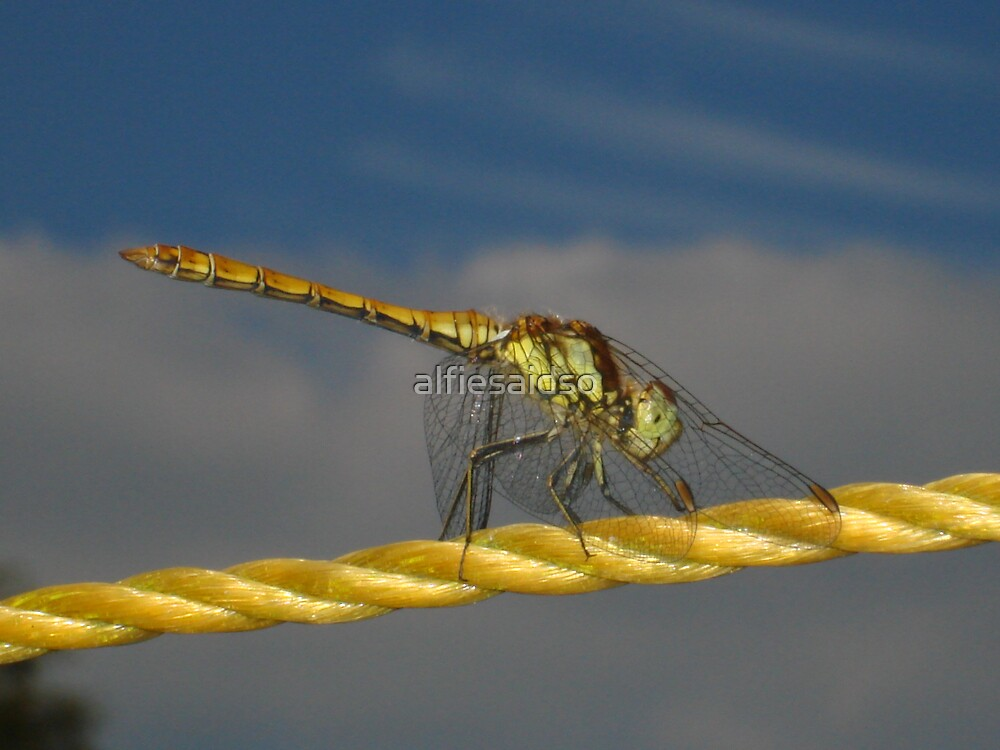 Dragonfly on washing line by alfiesaidso