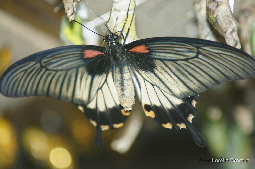 Wings Wide Open by Lorelle Gromus