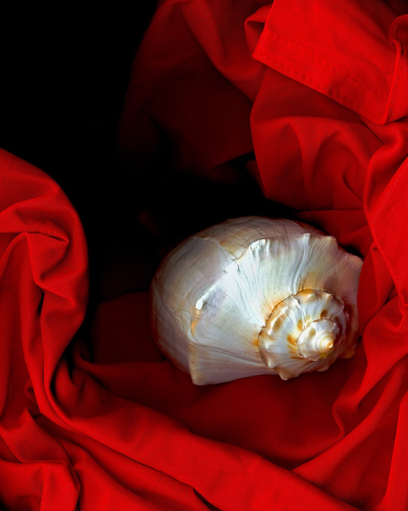 Shell and Satin by Lynda Lehmann