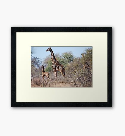 A PROUD MOTHER in the Wild Framed Print